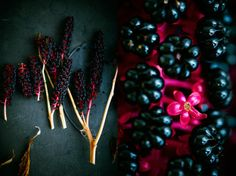 inkberry1.jpg (623×467)