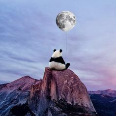 panda, moon, and sky image Niedlicher Panda, Panda Art, Panda Love, Cute Panda, Image Panda, Panda Wallpapers, Wallpaper Wallpapers, Art Tumblr, Surrealism Photography