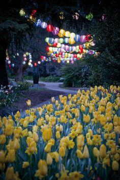 Floriade Nightfest - Canberra - Australia. Outdoor Party Lighting http://pinterest.com/wineinajug/outdoor-party-lighting/