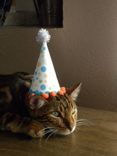 Jedi Craft Girl: How to Make a Birthday Hat for your Pet