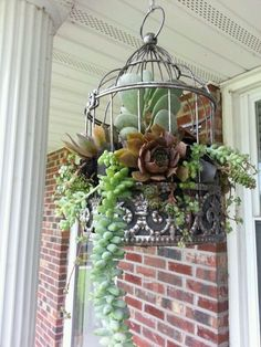Eye-Catching Birdcage Planter for Your Outside space. Succulents In Containers, Cacti And Succulents, Planting Succulents, Planting Flowers, Succulent Gardening, Container Gardening, Organic Gardening, Gardening Tips, Flower Gardening