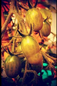 green baby tomatoos by ann van aken