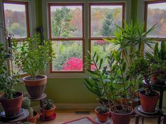 The air inside most homes is more polluted than the air outside. You can use houseplants to help purify the air in your house. Find out which plants are the best for fighting indoor air pollution.