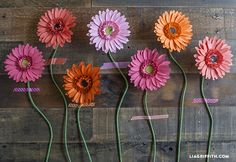 Make these gorgeous paper Gerbera daisies with this easy tutorial @LiaGriffith.com