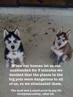 I pinned this to my dog shaming board but let's be honest. They don't look like they're ashamed of anything!