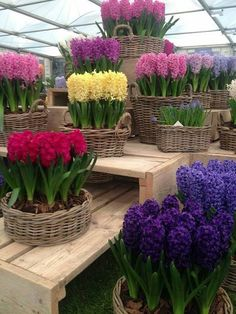 Pretty Baskets of Flowers...lots of bulbs!