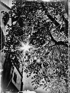 photo urban   free download photobank of black and white photos Black White Photos, Black And White, Free Black, City Photo, Dandelion, Urban, Flowers, Plants, Black N White