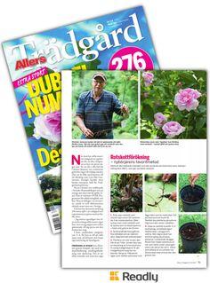 Tips om Allers Trädgård 17-07 sidan 75