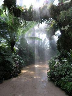 tropical garden... by Donn