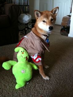 Ghost Buster! #dogs