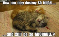 It's a good thing they're so adorable,  because they destroy so much