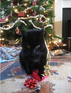 Cat Parents always use Log6ix Natural Odor Eliminator http://www.log6ix.com/products/natural-odor-eliminator