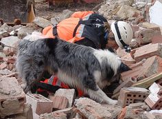 For Swiss Disaster Rescue Dogs, The Job - And Training - Never Ends