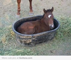 If it fits, I sits. Baby horse edition.