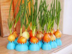 Onion+pots+by+3Domas.