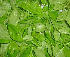 """Romarin,thym,laurier ...et fin de l'été alors mettez en pot les herbes aromatiques pour pouvoir cet hiver, en cuisine, bénéficier de leur pouvoir aromatique .Quelques astuces : Les herbes sèches.Thym,laurier, laurier ...s 'égrènent à """"rebrousse-poil""""..."""