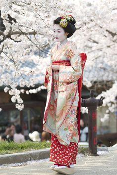 ~ Japanese Traditional Geisha Walking Under The Sakura Trees ~ Japanese Beauty, Asian Beauty, Samurai, Memoirs Of A Geisha, Art Asiatique, Turning Japanese, Art Japonais, Exotic Women, Yukata