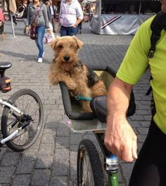 I don't always ride in a bike basket, but when I do, bitches bark.