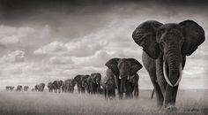 By Nick Brandt. Amazing photos, and he does amazing things protecting wildlife in Africa.