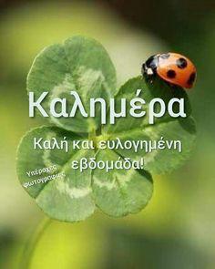 Καλημερα Good Morning, Greece, Beautiful Pictures, Day, Photos, Buen Dia, Greece Country, Pictures, Bonjour