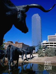Cattle-Drive Sculptures at Pioneer Plaza, Dallas, Texas Photographic Print by Richard Cummins at Art.com