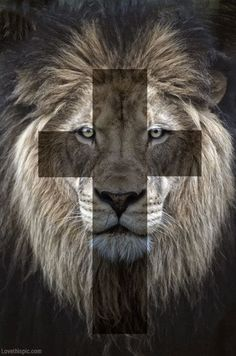Lion cross animals nature lion cross pinterest.com/rubiolopez