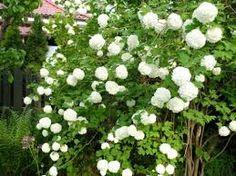 na biało w ogrodzie