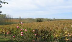 VineYard_LoireFrance_Domain for Sale, contact us for personal informations #luxury-life-style