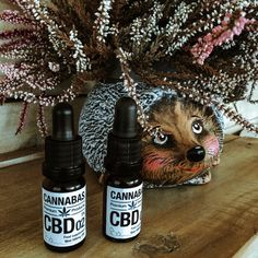 CBD: A CBD olajokkal harmóniát, nyugalmat, egyensúlyt vihetsz az életedbe. Prémium minőségű, legális, hatóság által regisztrált CBD olajaink kattintás után rendelhetőek, várunk szeretettel a CBD Webáruházban!