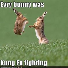 Every bunny was kung fu fighting!  lol