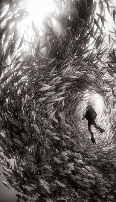 Buceando entre un banco de peces.