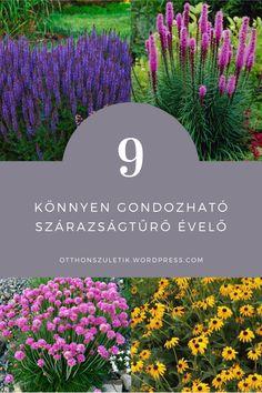 Dream Garden, Home And Garden, Lake Forest, Permaculture, Garden Planning, Outdoor Gardens, Garden Design, Backyard, Nature