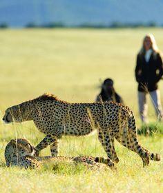 What It's Like to Take a Walking Safari