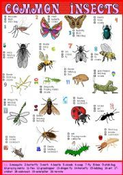 Common Insects Pictionary and Multiple choice + Key - ESL worksheet by karagozian List Of Insects, Insects Names, Clinical Research, Vocabulary Worksheets, Multiple Choice, Esl, Therapy, Birds, Garden