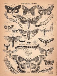 Free Graphics: Butterflies & Moths - The Graphics Fairy