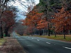 Mt Macedon Rd in autumn. Macedon Ranges, Places Ive Been, Country Roads, Autumn, Fall