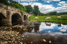 https://flic.kr/p/LdtDZm | Bridge, River, Horses | www.tenmenphotography.com …