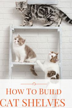 You'll need to make sure that the cat shelves you build are sturdy and safe. We'll walk you through what you need to do to make the ultimate exploratory toy!