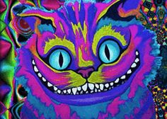 gif trippy creepy weird lsd acid psychedelic Alice In Wonderland surreal Abstract Trippy cat