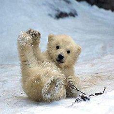 Sledding ~ETS #polarbear