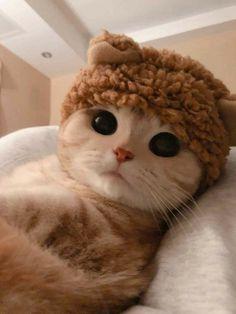 Cute Baby Cats, Cute Cats And Kittens, Cute Little Animals, Cute Funny Animals, Kittens Cutest, Cute Dogs, Pretty Cats, Beautiful Cats, Cute Cat Wallpaper