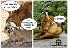 #umorismo #vignette #animali