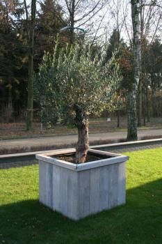 Jumbo thermal protection cover 240 x 200 cm. Beach Gardens, Olive Gardens, Photinia Red Robin, Types Of Olives, Door Protection, Garden Deco, Planter Boxes, Planter Ideas, Olive Tree