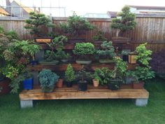 Beautiful bonsai display made by the husband. Display made with hollow concrete blocks & railway sleepers. We have 2 of these displays & they look amazing :)