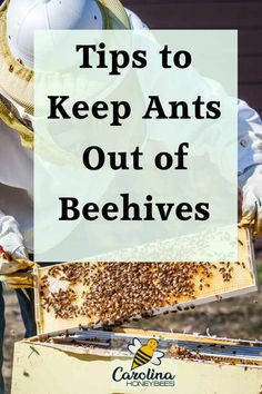 Ants in the beehive are they a problem? And how to keep them out, #carolinahoneybees #ants #beehives