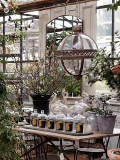 London Diary 2014 : A Walk Around at Petersham Nurseries | Vanillawalk