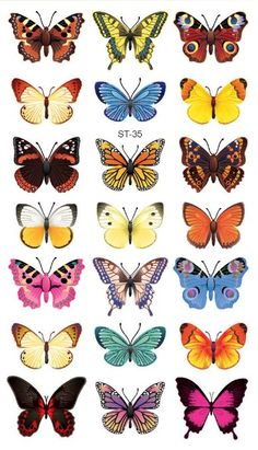 110 Small Butterfly Tattoos with Images Meaning of butterfly tattoos and pictures of cute and small Butterfly Tattoo designs and images for on the wrist, shoulder, foot or lower back. Small Butterfly Tattoo, Butterfly Drawing, Butterfly Tattoo Designs, Butterfly Painting, Butterfly Tattoo Meaning, Small Tattoo, Butterfly Images, Butterfly Tattoo On Shoulder, Simple Butterfly