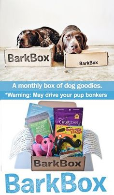 bark box   box of high quality dog products for your pup, delivered to your ...