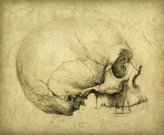 Illustration about Human skull drawing. Pencil on paper & vintage processing. Illustration of damaged, artwork, horizontal - 22003466 Medical Illustration, Illustration Art, Figure Drawing, Painting & Drawing, Model Tattoo, Anatomy Bones, Human Skull, Vanitas, Skull And Bones