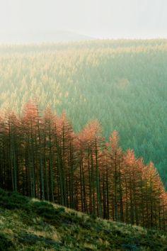#treesontreesontrees